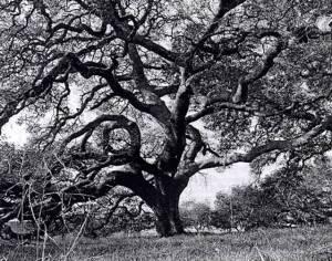 Vriksasana..........Balancing Tree