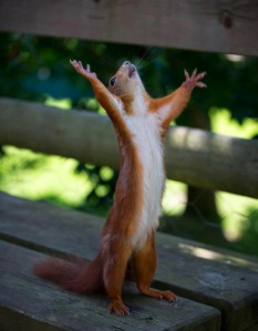 squirrel_noixmaste